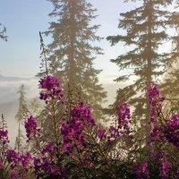 В росное туманное утро :: Сергей Чиняев