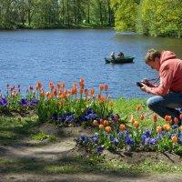 Фотограф и тюльпаны :: Aнна Зарубина