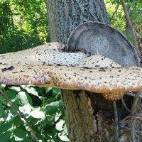 Вот какой большой гриб вырос! :: Наталья