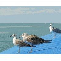 чайки в сентябре :: Николай Староверов