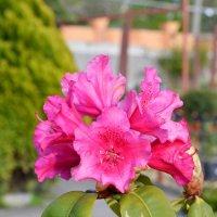 Цветы :: Евгений Чумаченко