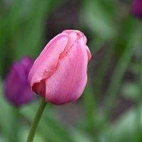 Палитра красок мая... :: Валерий Подорожный