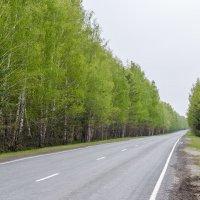 Дорога :: Алексей Игнатьев