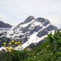альпийские красоты :: Olga