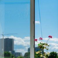 Цветы на окне :: Павел Кореньков