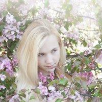 Яблони цветут :: Albertik Baxton