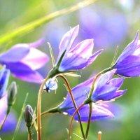 Цветики степные :: Марина