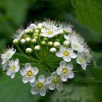 Пора цветения :: Дубовцев Евгений