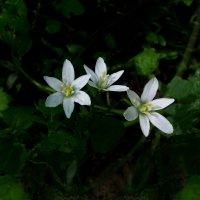Дворовые цветы-малыши :: Дубовцев Евгений