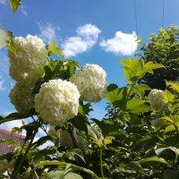 Бульдонежка в цвету :: BoxerMak Mak