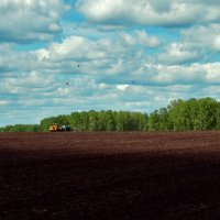 Посев пшеницы :: Владимир Деньгуб