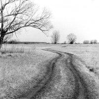 Пейзаж из весны :: Сергей Тарабара