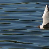 Я чайка..,мол..я чайка...)) :: tipchik