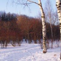 Зимний пейзаж с березами :: Анна Воробьева