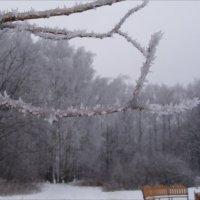 Иней ледяного дождя :: Анна Воробьева