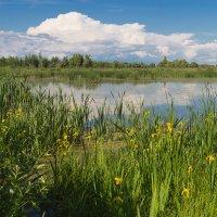 Озеро :: Олег Манаенков