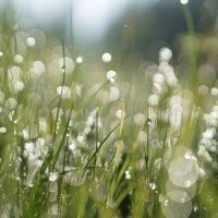 ...и на боке растет трава. :: Валентина Налетова
