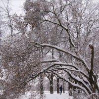 Зимний парк :: Анна Воробьева