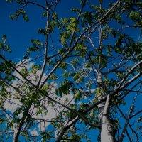 красивое облачко :: Olesia Dildina