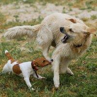 Собака бывает кусачей... :: Анатолий Шулков