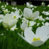 Цветы :: Марина Легкая