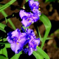 Цветы необычайной красоты... :: Тамара (st.tamara)
