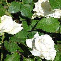 Цветы невесты... :: Тамара (st.tamara)