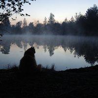 Белая ночь :: Мария Кондрашова