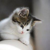 Наш домашний котенок. Немного личного. Таня Турмалин. Фотограф. :: Таня Турмалин