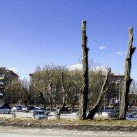 Деревья :: Сергей Мухин