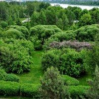 Марьинские сады :: Анатолий Колосов