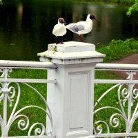 Чайки 1 :: Сергей