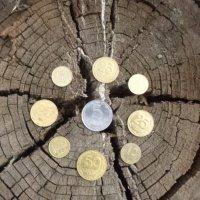 Денежное дерево... :: Алекс Аро Аро