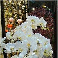 Орхидея :: Veselina *