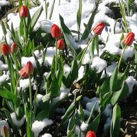 Зимняя весна :: Валюша Черкасова