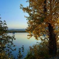 Золото листвы :: vladimir Bormotov