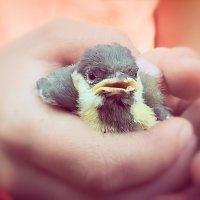 Спасенный птенец :: Сергей Форос