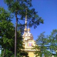 Собор Петропавловской крепости. (Санкт-Петербург). :: Светлана Калмыкова