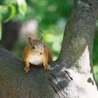 На дереве :: Aнна Зарубина