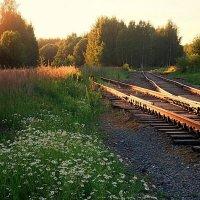 Старая железная дорога, в закатный час :: Николай Белавин
