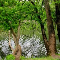 Река Темерник :: Нина Бутко