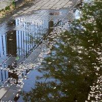 После майского дождя :: Нина Бутко