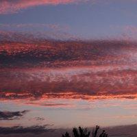 Розовое море :: Мария Фокина