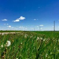 Лето в деревне :: Любовь Шугинина
