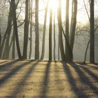 Утро в весеннем парке... :: Юрий Цыплятников