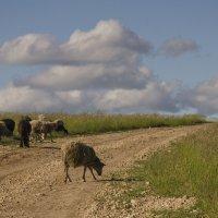 Пейзаж с барашками :: Лариса Березуцкая