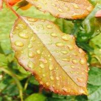 после дождя :: Любовь Нестерова