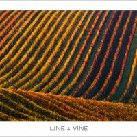 Line & Vine :: Влад Соколовский