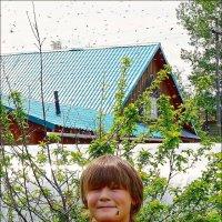 Неправильная пчела... :: Кай-8 (Ярослав) Забелин