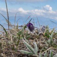 весна в горах :: Михаил